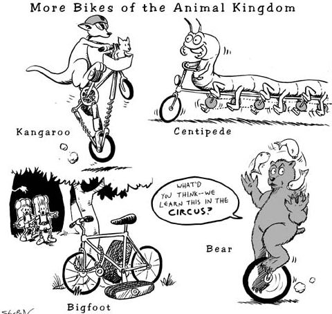 animals and bicycles relationship